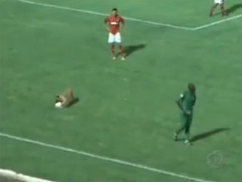 Chú chó giải nguy cho đội áo đỏ khi đội còn lại đang tổ chức tấn công.