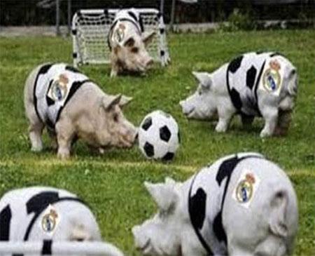Huyền thoại Barca ví Real như đàn lợn đá bóng