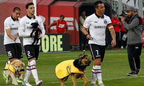 Đội bóng Chile dẫn chó ra sân để làm linh vật